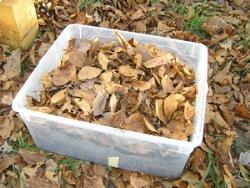 Mini Kühlschrank Für Schildkröten : Winterstarre winterruhe bei landschildkröten u die schildkröten