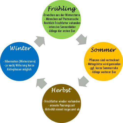 Jahreszyklus der mediterranen Landschildkröten