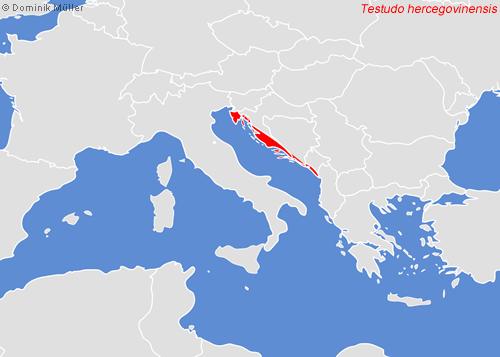 Natürliches Vorkommen der Dalmatinischen Landschildkröte (Testudo hermanni boettgeri var. hercegovinensis). (C) Dominik Müller
