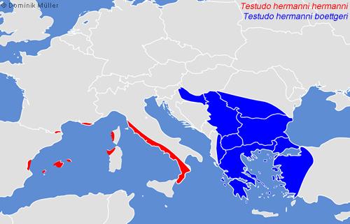 Natürliches Vorkommen der Griechischen Landschildkröte (Testudo hermanni). (C) Dominik Müller